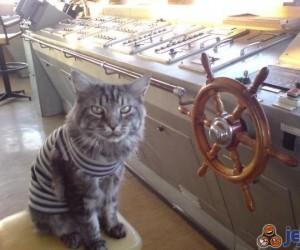 Kot kapitana