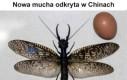 Nowa mucha odkryta w Chinach