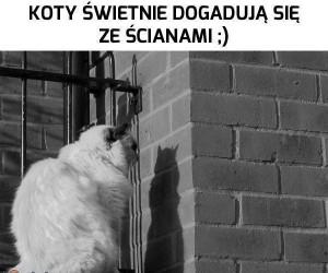 Koty świetnie dogadują się ze ścianami