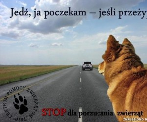 Nie porzucaj zwierząt