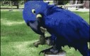 Sprytna papuga