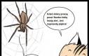 Szczęśliwy dzień pająka