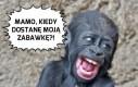 Mały King Kong