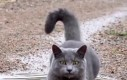 Kot ze sterownikami psa