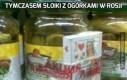 Tymczasem słoiki z ogórkami w Rosji