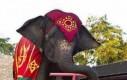 Rowerek dla słonia