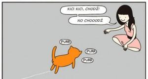 Koty jak zawsze swoimi ścieżkami
