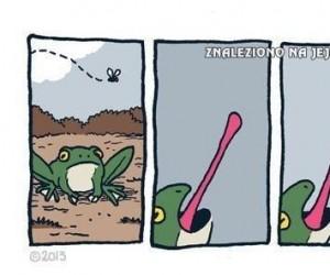 Żaba?