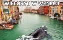 Wieloryb w Wenecji