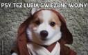 Psy też lubią Gwiezdne Wojny