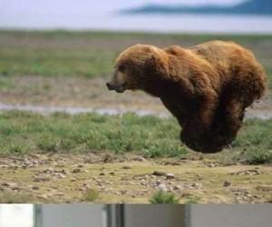 Niedźwiedzie, psy i koty latają!