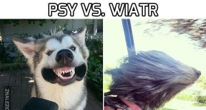 Psy vs. Wiatr