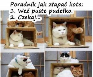 Poradnik jak złapać kota