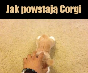 Jak zespawnić corgi
