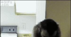 Małpka próbuje cytrynę, ale chyba jej nie zasmakowała...