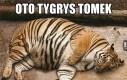 Tygrys Tomek