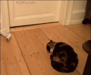Przerażenie kota
