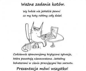Koty naprawdę mają bardzo dużo pracy