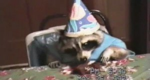 Szopy też muszą obchodzić urodziny