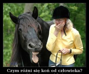 Czym różni się koń od człowieka?