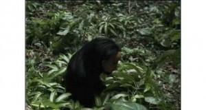 Co można spotkać w dżungli