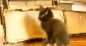 Koci wierzchowiec