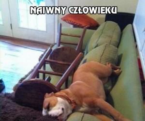 Psa nie pokonasz, jego lenistwa tym bardziej