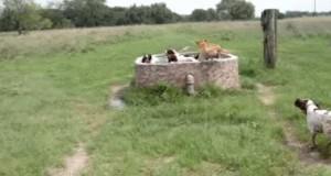 Psi raj