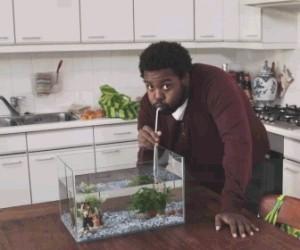 Jak powstają paluszki rybne