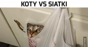Koty vs siatki