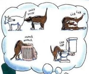 Psi pocałunek