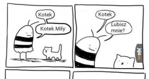 Miłość do kotka