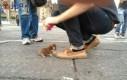 Szczeniak napotkany w mieście Meksyk