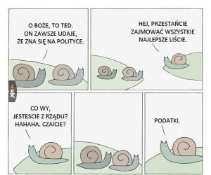 Polityczny ślimak