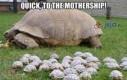 Szybko, do Statku Matki!