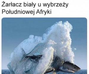 Żarłacz: Legenda Aanga