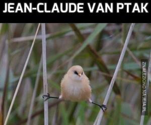 Jean-Claude Van Ptak