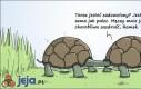 Zazdrosny żółw Roman