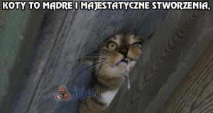 Koty to mądre i majestatyczne stworzenia