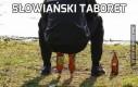 Słowiański taboret