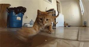 Kot i czerwona kropka