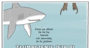 Rekiny nie mają łatwo