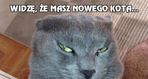 Widzę, że masz nowego kota...