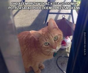 Chciałem przywołać kota do domu, potrząsając pudełkiem z przysmakami