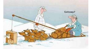 Psy na biegunie