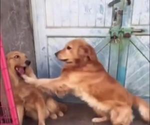 Pies zwala winę na swoją dziewczynę