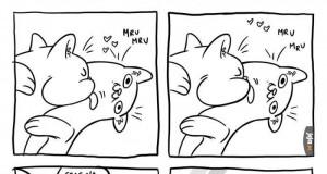 Szalone koty