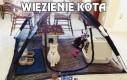 Więzienie kota