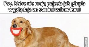 Psy, które nie mają pojęcia jak głupio wyglądają ze swoimi zabawkami