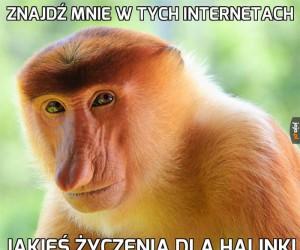 Znajdź mnie w tych internetach